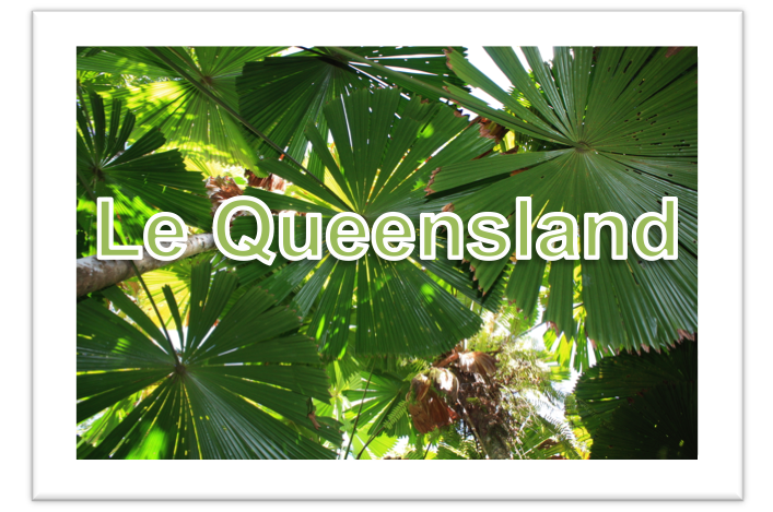 vignette_queensland