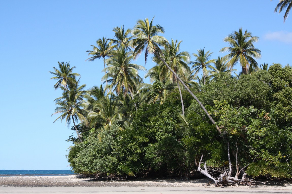 cocotiers cape tribulation